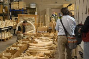 what is ivory used for
